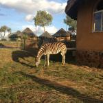 Foto de Heia Safari Ranch