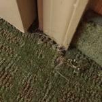 Ripped carpet near bathroom