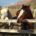 Friendly horses; they love apples!