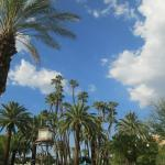 Palm Trees at Pool Area