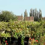 Photo of Silk Road Lodges - The Vines