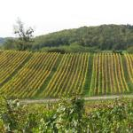 Photo of Domaine du Revermont