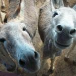 Photo de Donkey Sanctuary Bonaire