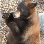 Afternoon baby bear visit
