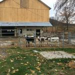The barn with new occupants
