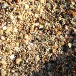 The beach consists of little shells