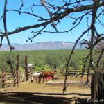 Tombstone Monument Guest Ranch Foto