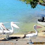 North Coast Holiday Parks Ferry Reserveの写真