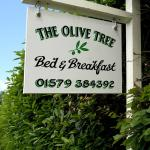 The Olive Tree의 사진