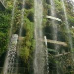 waterfall in Cloud Forest
