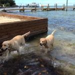 Fiona's two beautiful dogs having fun in Beach