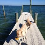 Fiona's dogs just playing in our new Dock