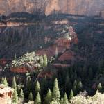 Boynton Canyon - looking back into the canyon from near the trail end (see my review)