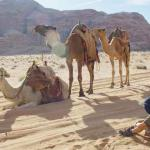 Waiting to 'board' our camels