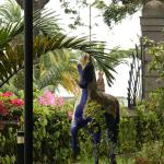Horse in the park