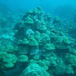 This is one of the dive sites called the Mushroom Forest