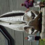 Whale skull at the museum beforehand
