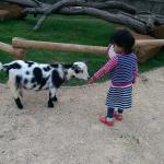 my Daughter feed lambs