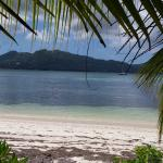 Beach with seaweed and overlooking Mahe