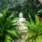 Buddha statue in the grounds