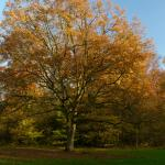 The color of autumn in the Amste