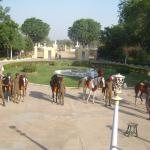 The parading of the horses before we began our trip