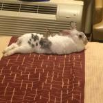 "My pet rabbit ""Narvik"" found the beds comfortable."