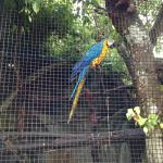 Zoo - Blue and Gold Macaw.