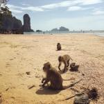 The monkeys at the end of the Monkey Trail