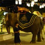Elephant ride for the kids