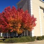 A beautiful Fall Day here at Quality Inn and Suites Bossier City, LA.