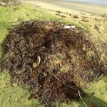 stinking waste at the sea