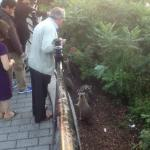 Tourists Feeding the Racoon Family