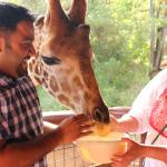Feeding giraffes..they've got the cutest tongues!
