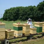 Attendees at a Beehive Tour and Honey Tasting