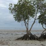 The mangroves break the beautiful monotony of the sea view. But it's all good!