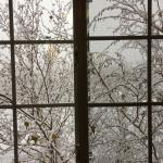 View from 2nd floor hallway window. Beautiful Snowfall today!