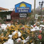 Decorative flowers at hotel but frozen in early-season cold and snow