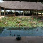 Frog Pond within the Lobby