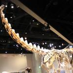 Dinosaur at Perot Museum
