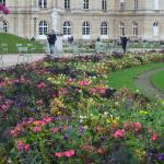 Flowers in the Luxembourg Garden