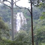Фотография Waterfalls Homestay