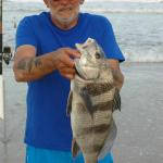Black Drum caught on the beach