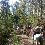 Notice the troublesome Eucalyptus trees amongst the endemic species