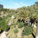 Photo of Palm Groves (Palmeral) of Elche