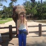 Playing with the elephants