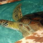 Foto di Sea Turtle, Inc.