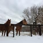 Beautiful horses of the property