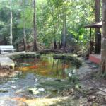 Photo of Amazon Ecopark Jungle Lodge