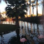 صورة فوتوغرافية لـ ‪Desert Springs JW Marriott Resort & Spa‬